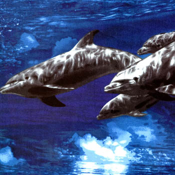 Ocean Adventure by Fabri-Quilt - Dolphins